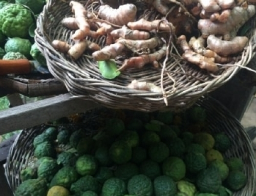 A Bit of Insight about Khmer Herbal Medicine
